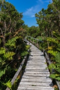 Another boardwalk in the National Park