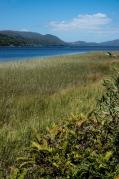 The wetlands around Lago Huillinco