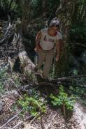 Crossing a fallen log