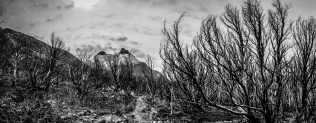 A devestating bushfire ripped through here in 2011 and this isn't like Australian bush that recovers easily.